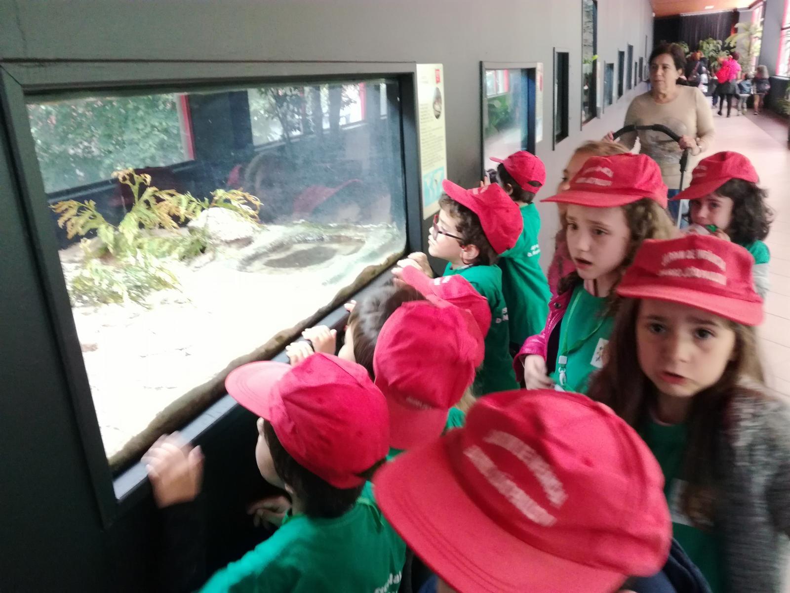 Visita de Estudo ao Zoo da Maia